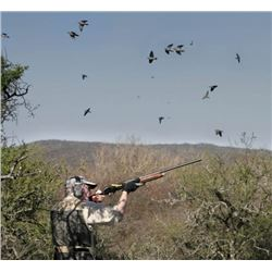 Dove Shooting Safari in Argentina
