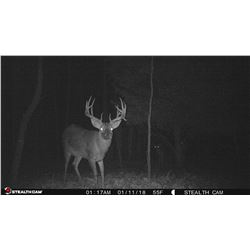 Whitetail Hunt across Multi-state