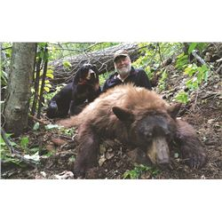 Spring Black Bear with Hounds