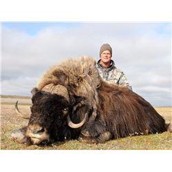 Alaska Nunivak Island Bull Muskox Special Permit (DX001/DX003)
