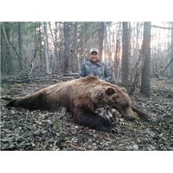 Seven Day Alaska Spring Grizzly & Black Bear Bear Hunt Over Bait