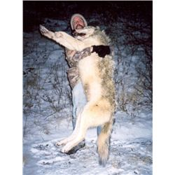 Seven Day Winter Predator Hunt in Alaska