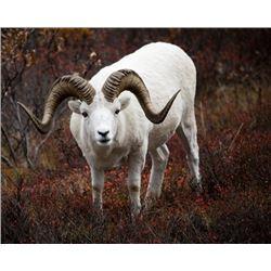 Alaska Range Special Access Dall Sheep Permit