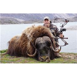 Five Day Muskox Hunt in Greenland