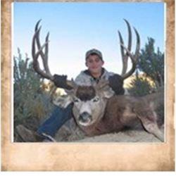 Paunsaugunt, Mule Deer