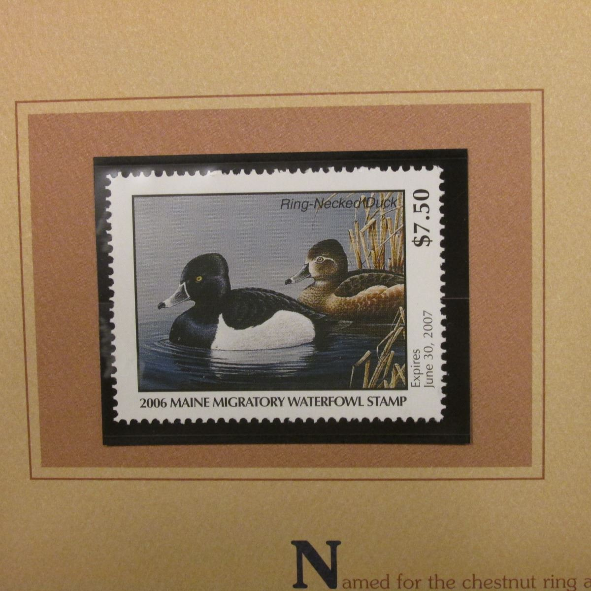 2006 Maine Migratory Waterfowl Conservation $7 50 Stamp depicting  Ring-necked Ducks, Pristine Mint c