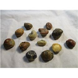 Lot of 13 Snail/Clam Fossils from The Black Hills South Dakota