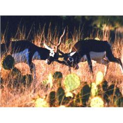Texas: BRB Ranch