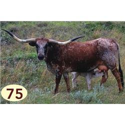 WAMPUM 71