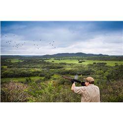 Argentina Dove Hunt for 4