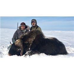 6 Day Mainland Muskox Hunt in Nunavut