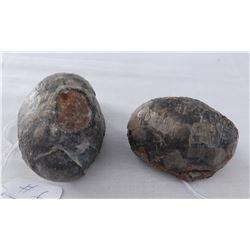 2 Dinosaur Eggs