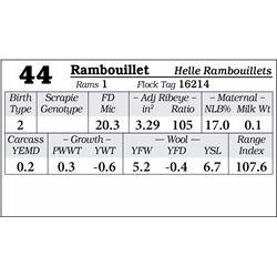 Lot 44 - Rambouillet