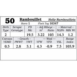 Lot 50 - Rambouillet