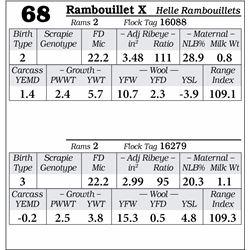 Lot 68 - Rambouillet X