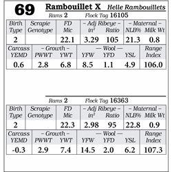 Lot 69 - Rambouillet X