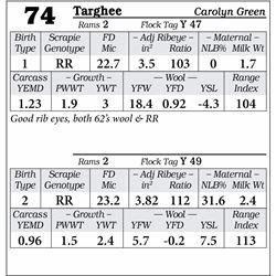 Lot 74 - Targhee
