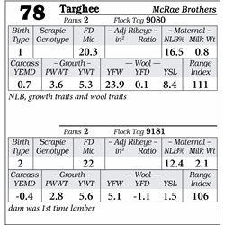 Lot 78 - Targhee