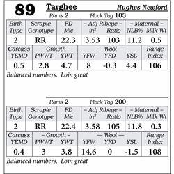 Lot 89 - Targhee