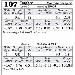 Lot 107 - Targhee