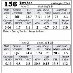 Lot 156 - Targhee