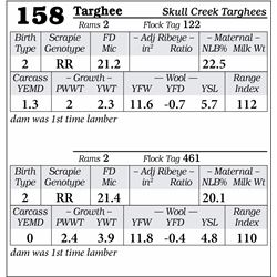 Lot 158 - Targhee