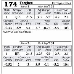 Lot 174 - Targhee