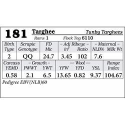 Lot 181 - Targhee