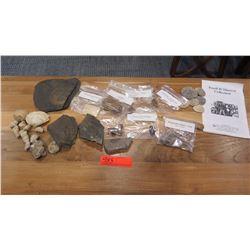 Various Fossils: Trilobites, Dino Dung, Squid, Fish, Clams, Rocks, etc.
