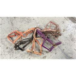 6 Good Used Halters