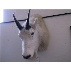 "Rocky Mountain Goat- 8.25"" L X 5"" Bases"