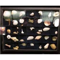 """Nice collection of various types of Sea Shells in a glass-faced frame measuring 12"""" x 16"""" x 1.5"""". Co"""