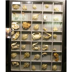 """Nice collection of various types of Crabs in a glass-faced frame measuring 12"""" x 16"""" x 1"""". Contains"""