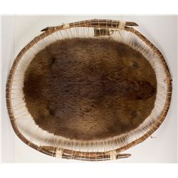 Mounted Beaver Pelt