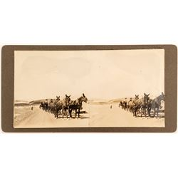 Stereograph of 20 Mule Train, Nevada Borax
