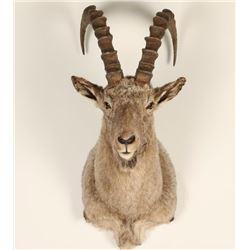 Ibex Goat Mount