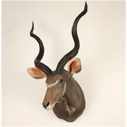 Grand Kudu Mount