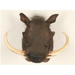 Shoulder Mounted African Warthog