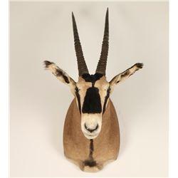 Oryx Mount
