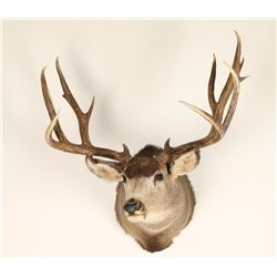 6X6 Buck Mount