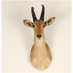 African Game Animal Mount