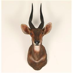 Small African Game Animal
