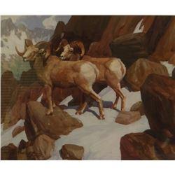 Mueller, Ned, 9 x 11,  Rockey Mountain Rams (gouache)