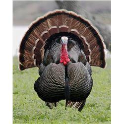 2018 Spring Rio Grande Turkey Hunt