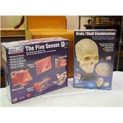 Pair Of Human Body Models, SEALED, Brian Skull/ The Five Senses