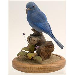 Mountain Bluebird by Jerry Dollar