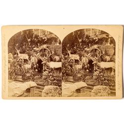 1876 Centennial International Exhibition Stereoview of Martha Maxwell's Rocky Mountain Exhibit