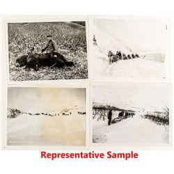 Alaska Horse Train Photographs