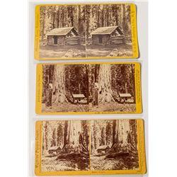 Three Rare Big Trees Stereoviews: Galen's Hospice