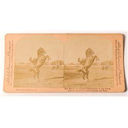 1880s Stereoview of Mrs. Wild Bill Hickok on Horse